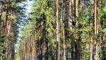 W lesie 039.jpg