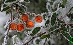 """Mroźne """"handmade"""" wczesnej zimy w obiektywie Reporterki 24"""