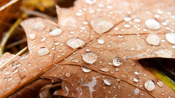 Prognoza pogody na dziś: dzień będzie pochmurny, ale wyjątkowo ciepły