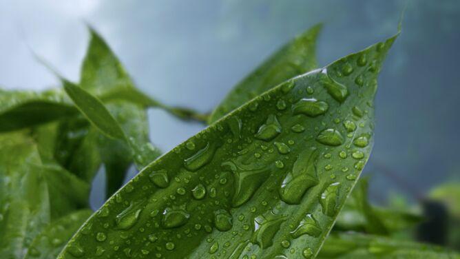 Pogoda na dziś: deszczowa aura, lokalne burze i 30 stopni Celsjusza