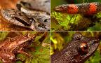 Niektóre z nowo odkrytych i ponownie znalezionych gatunków w boliwijskich Andach
