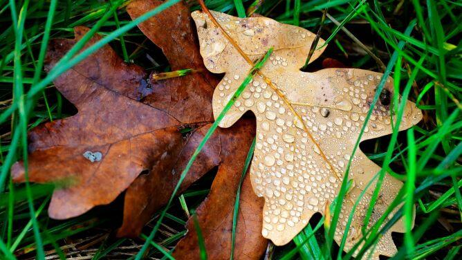 Pogoda na dziś: w części kraju deszczowo, do 19 stopni Celsjusza