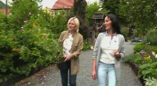 Ogród i dom 'Pod brzozą' (odc. 655)